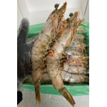 Tiger prawns whole U6 jumbo (3kg)